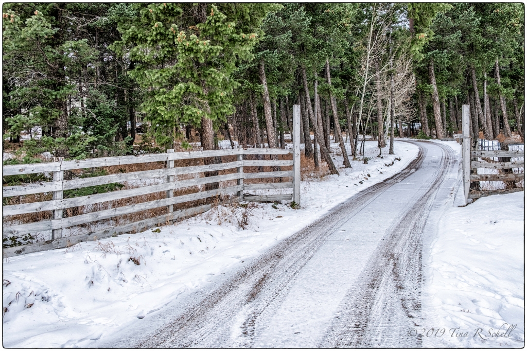 snow-covered country lane
