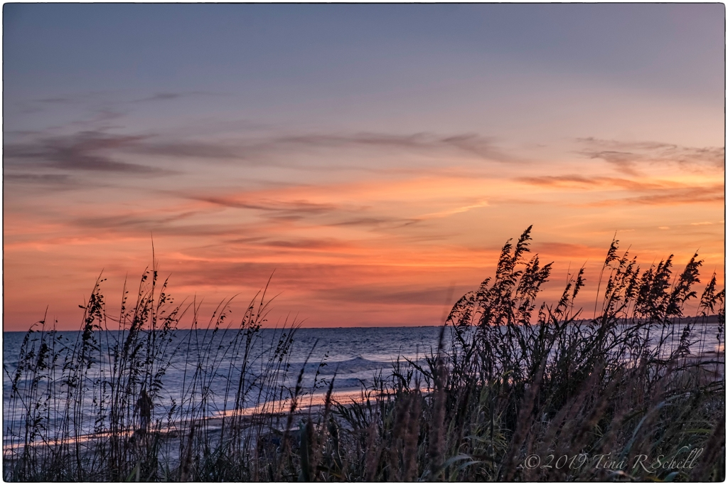 SEA OATS, SUNSET, Kiawah Island