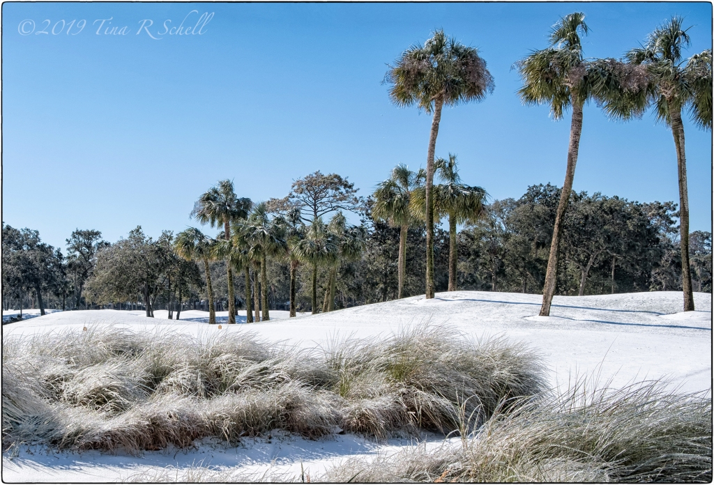 Kiawah, snow, palmetto