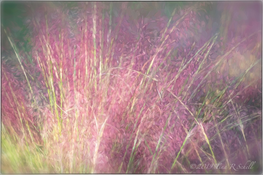 SWEETGRASS ABSTRACT