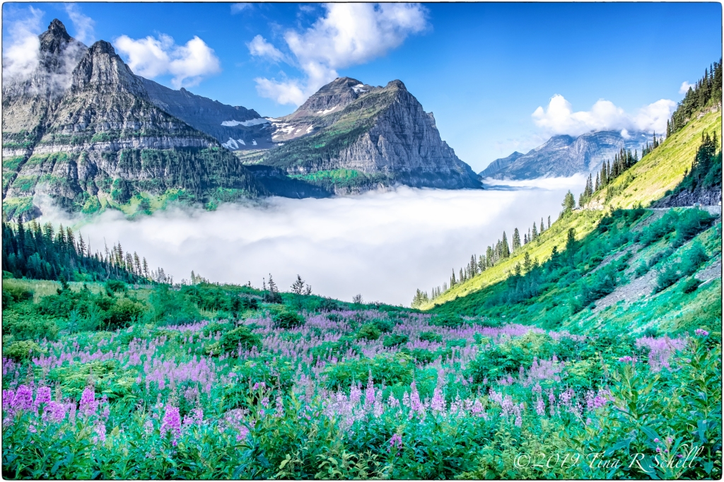 Glacier National Park, mountains, clouds, flowers