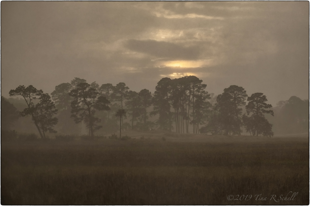 Kiawah landscape, fog