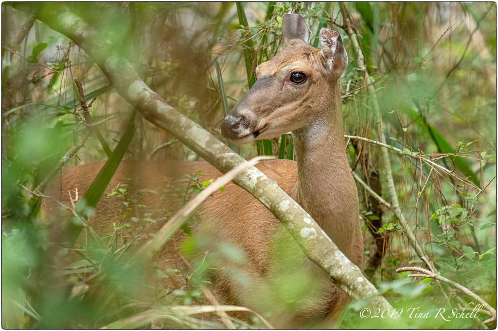 deer, foliage