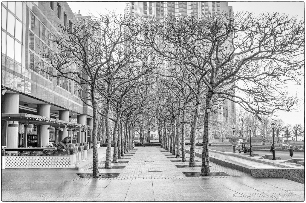 B&W,TREES, NYC