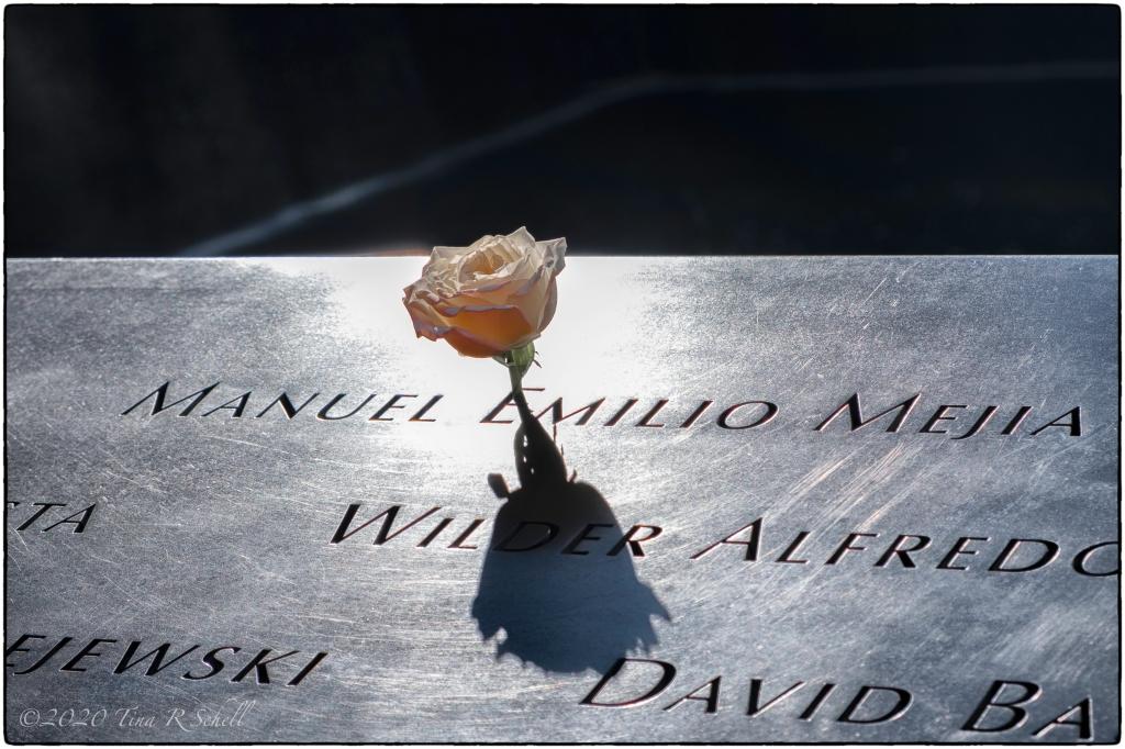 9/11 Memorial, rose