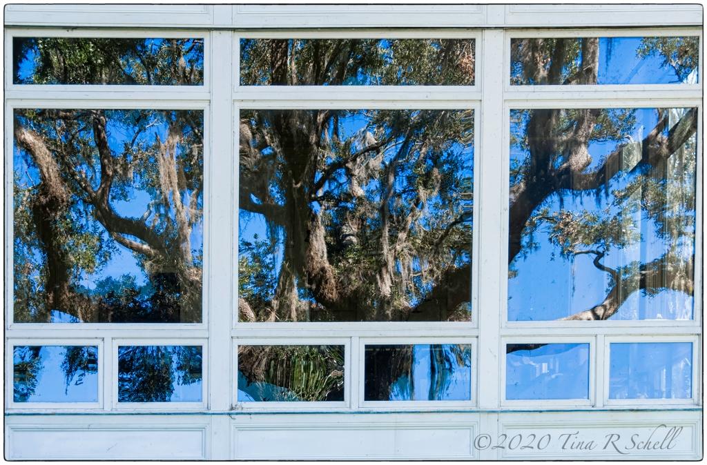 window, live oak