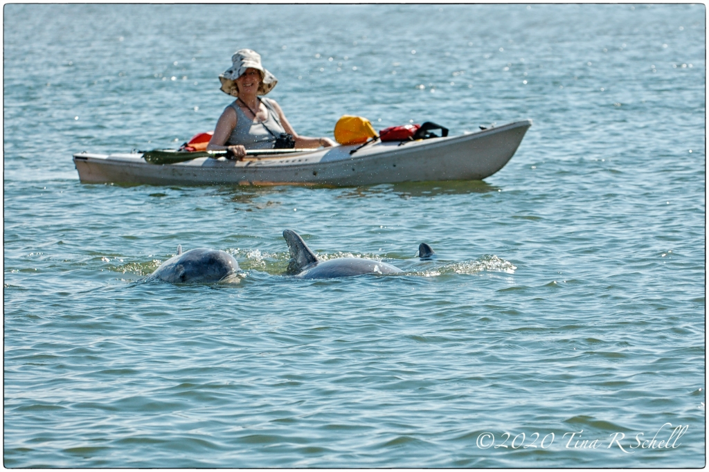 DOLPHINS AND TOURIST, KIAWAH RIVER