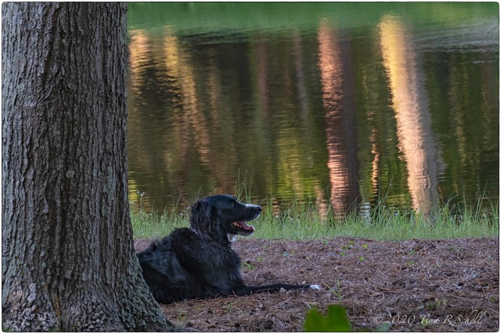 dog, lagoon