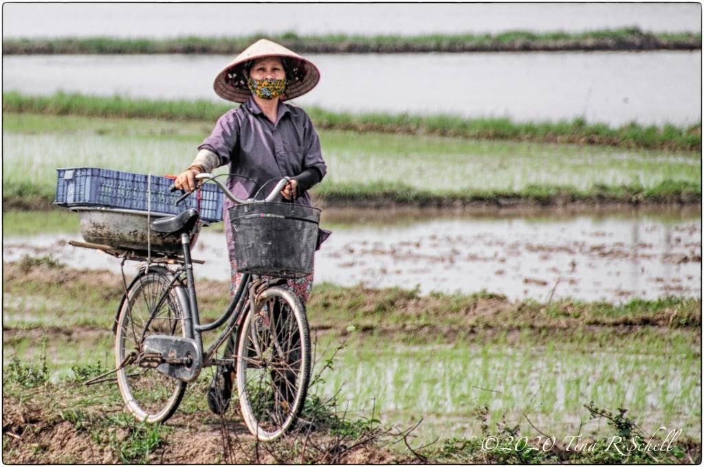 vietnamese woman, bicycle, rice paddies