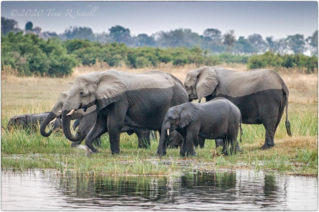 ELEPHANTS WET