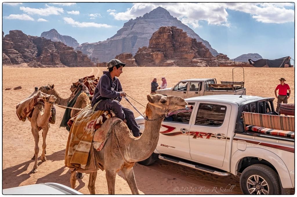 CAMELS, TRUCK, DESERT
