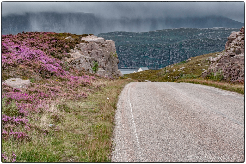 HEATHER, Scotland, FOG
