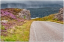 HEATHER, FOG, Scotland