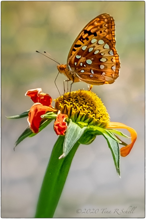 butterfly, flower, orange, red, yellow