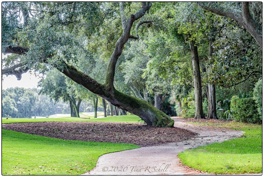 path, trees, golf course, Kiawah