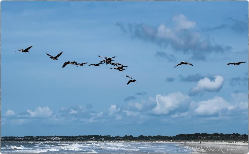 clouds, ocean, pelicans