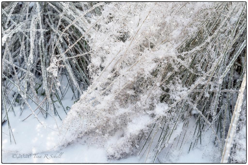 SNOWY SWEETGRASS