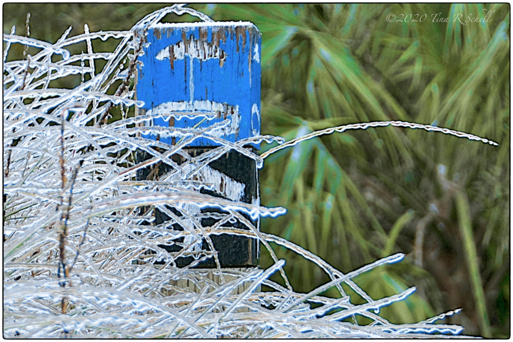 icy grasses, beach sign, kiawah