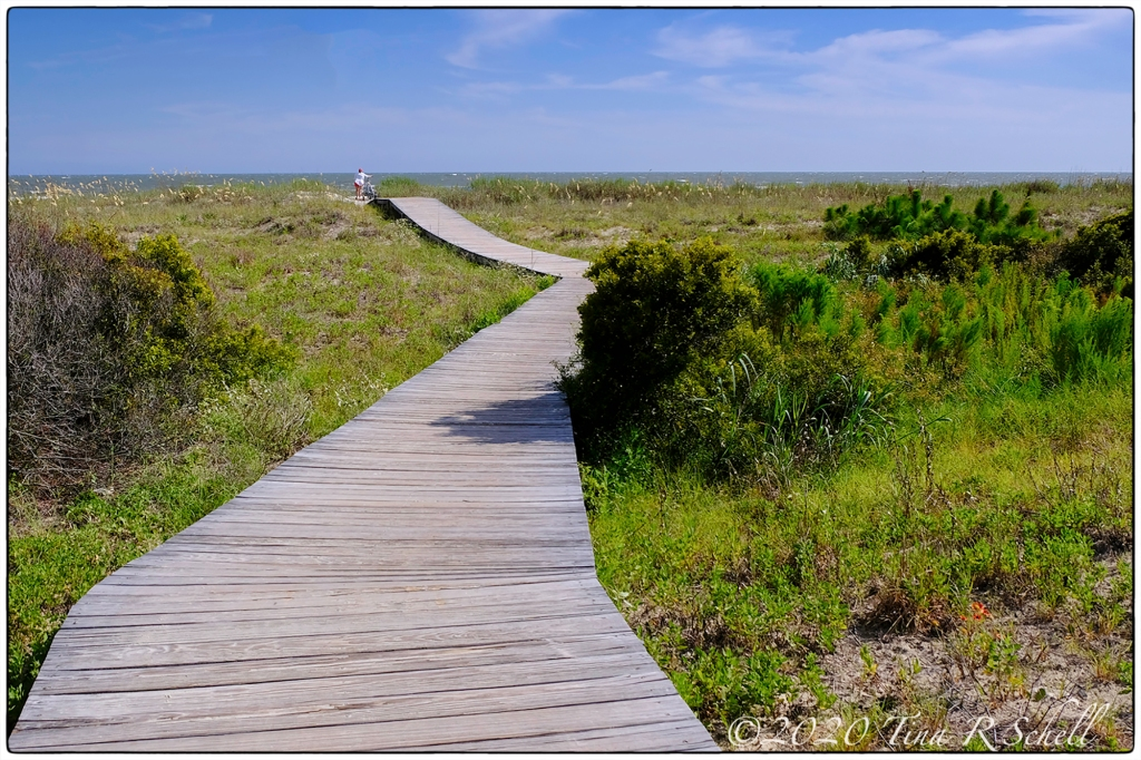 boardwalk, path, beach, kiawah island