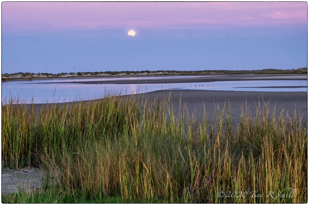 MOON, MOONLIGHT, MARSH, POND, KIAWAH