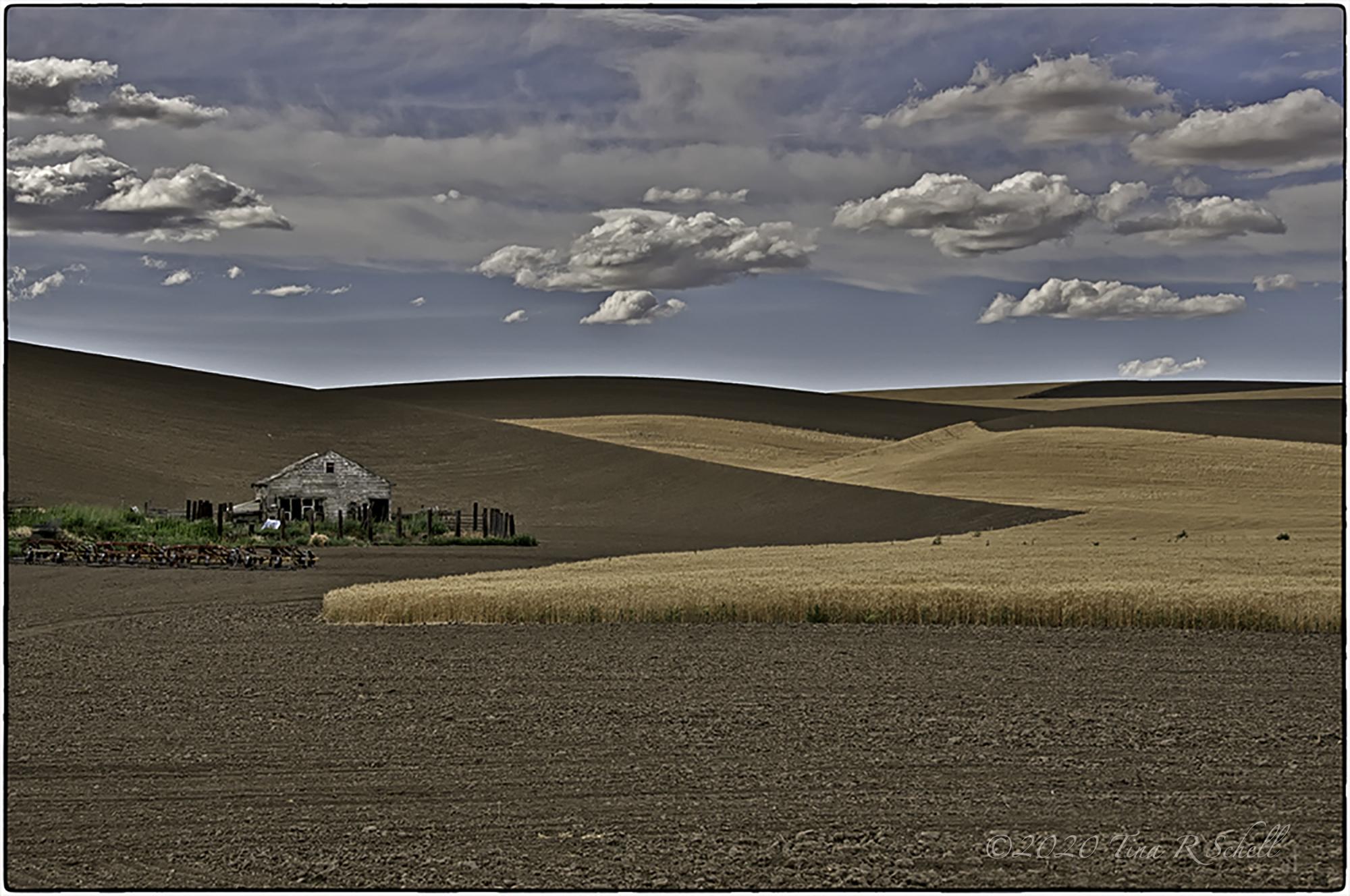 Palouse, farmland, shadows