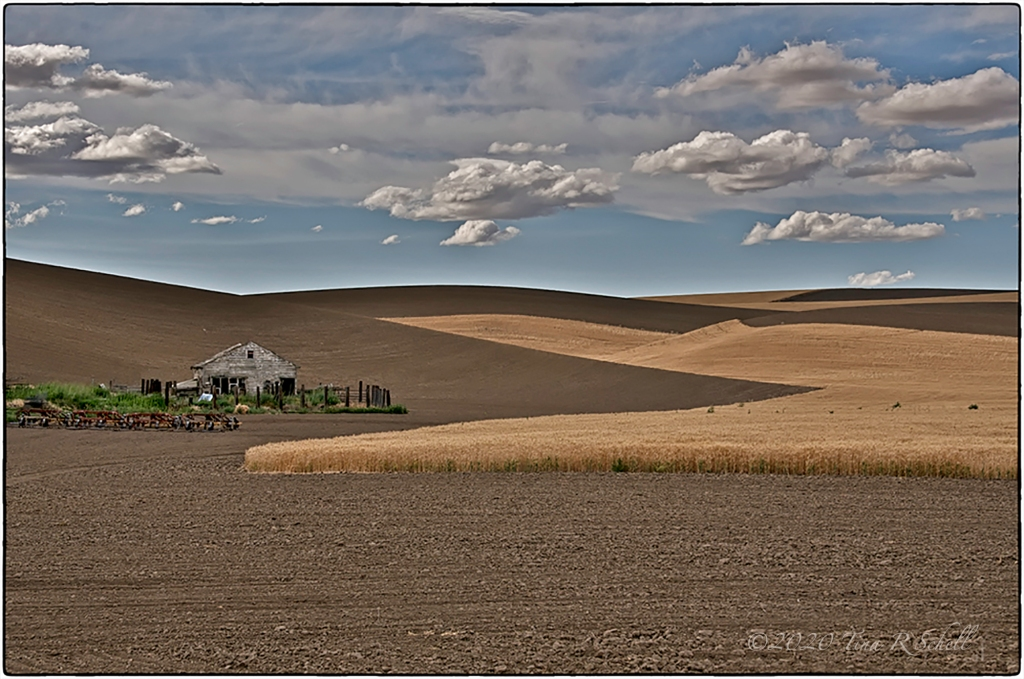 Palouse, farmland, shadows
