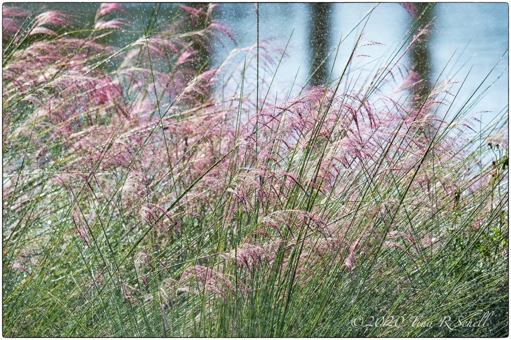 sweetgrass, water, trees, kiawah