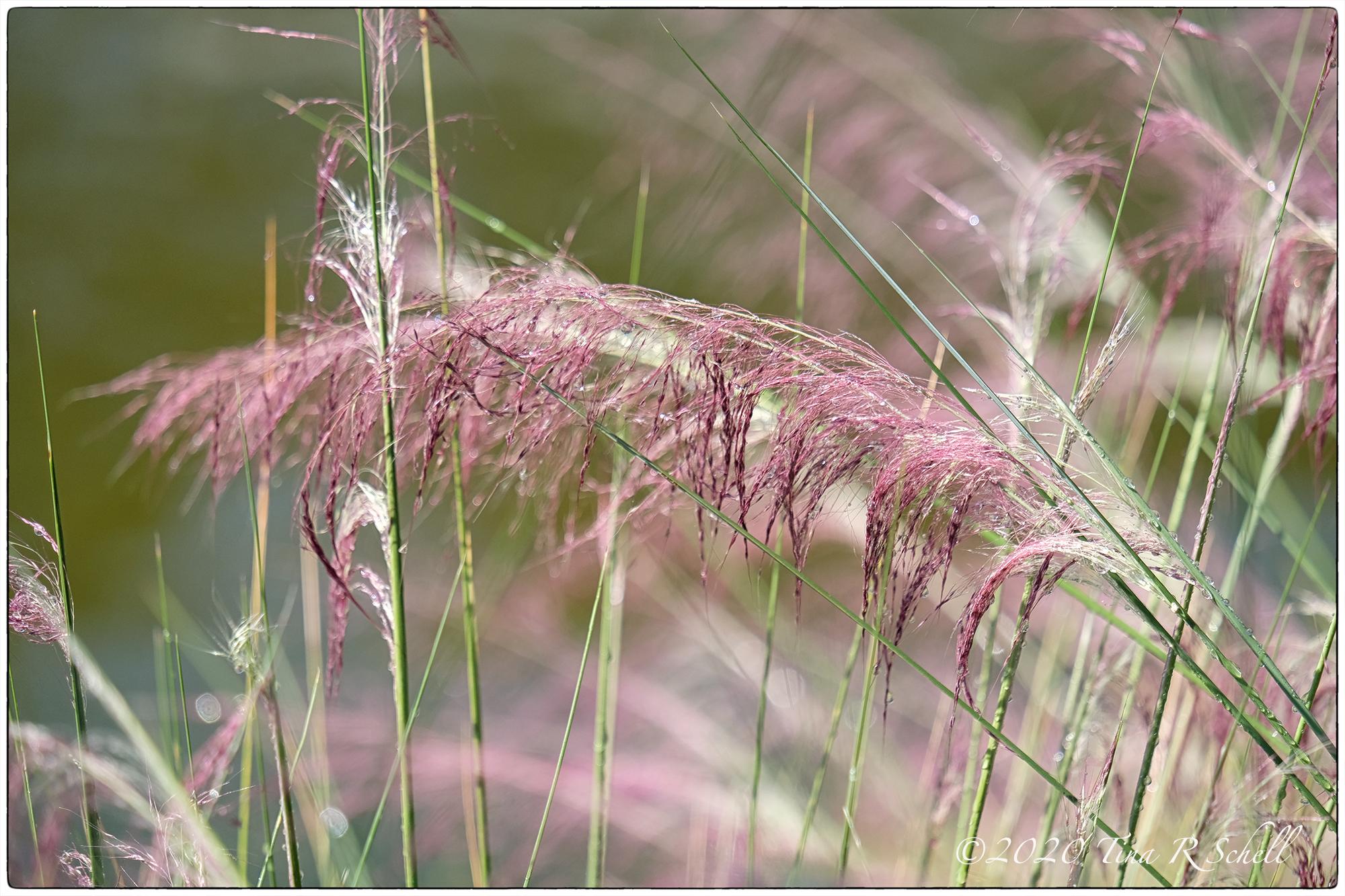 sweetgrass, kiawah