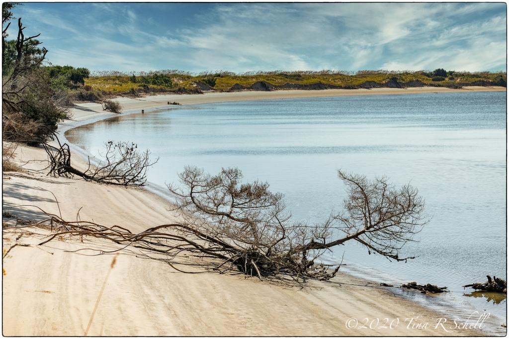 lagoon, branch, water, kiawah