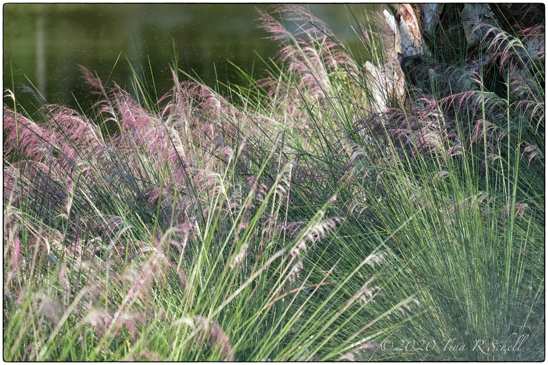 sweetgrass, kiawah, pink, green