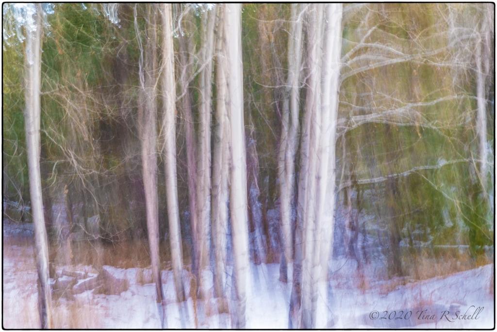 white,birch, pan