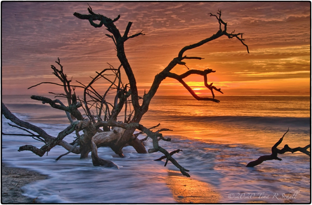 SUNRISE, BOTANY BAY SC