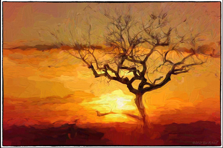 sunset, Botswana, art