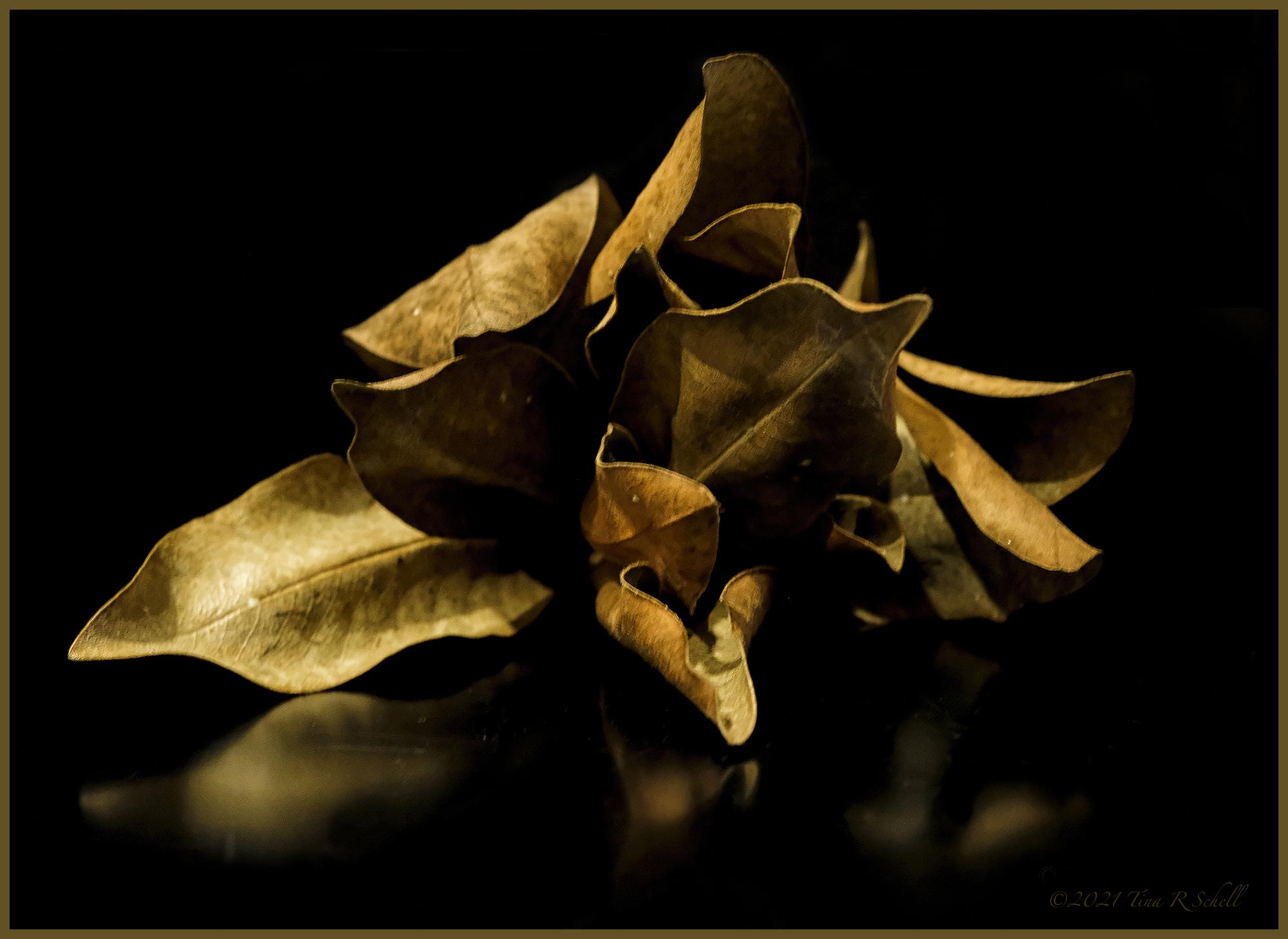 bouquet of dead leaves