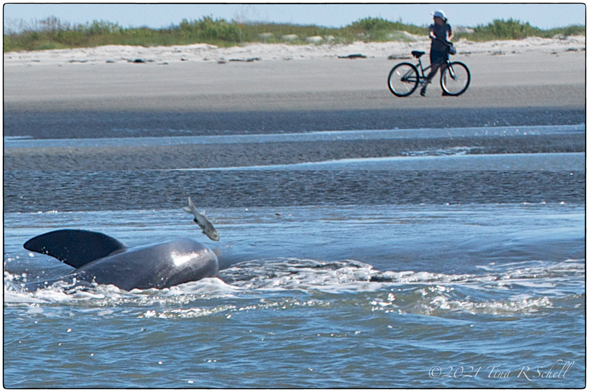 dolphin, fish, ocean, bicycle