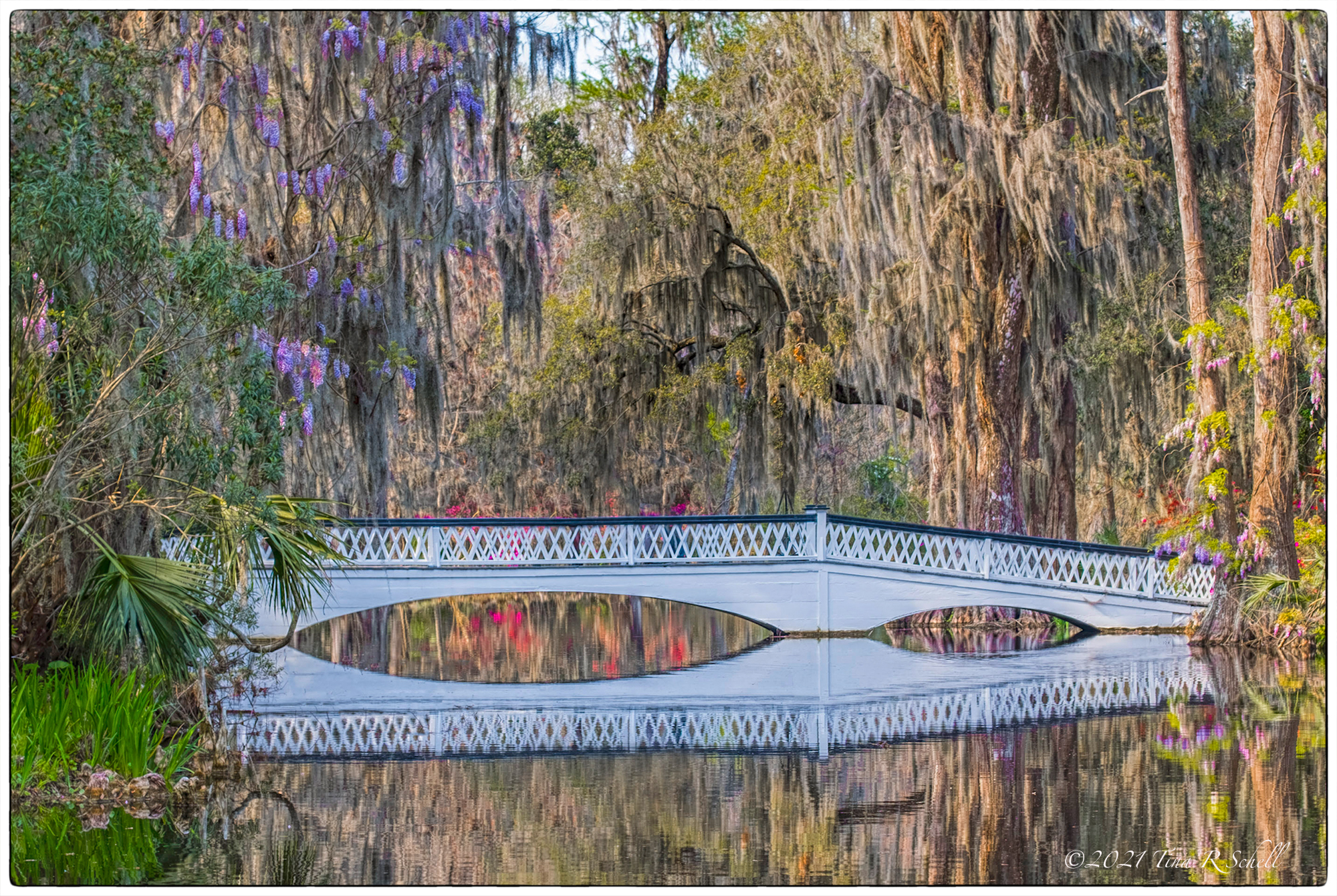 bridge, Magnolia Gardens