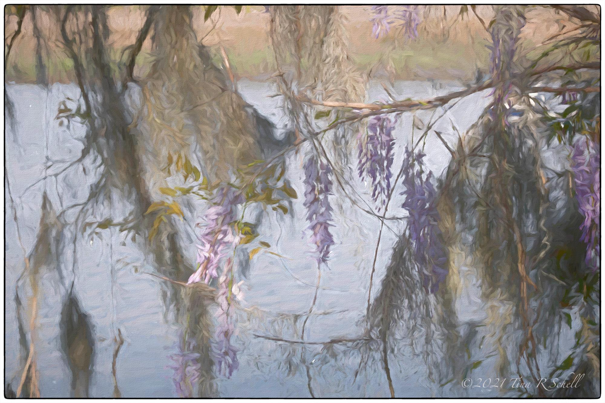 wisteria, artistic impression