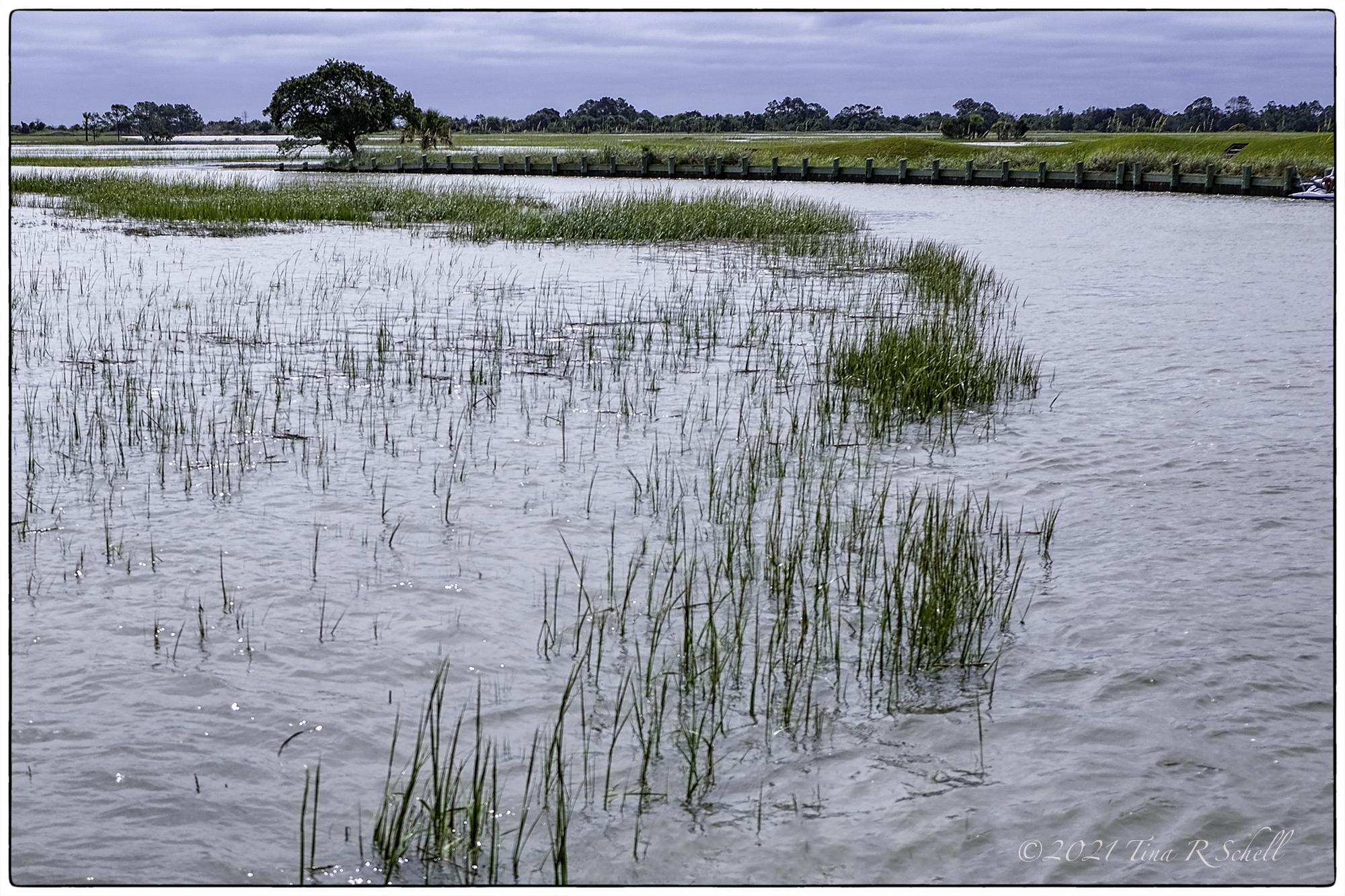 King Tide, Kiawah Island, Marsh