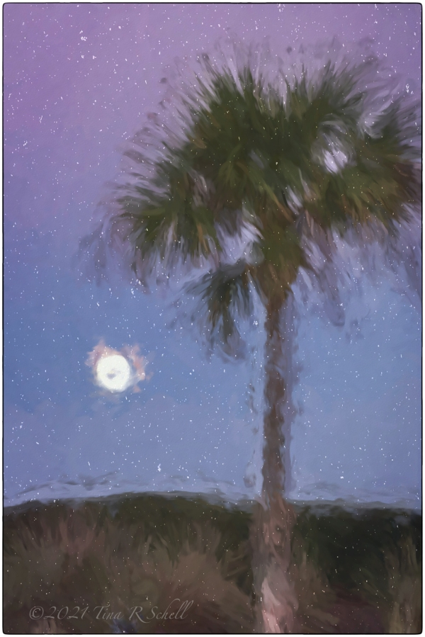 art, impression, palmetto, moon