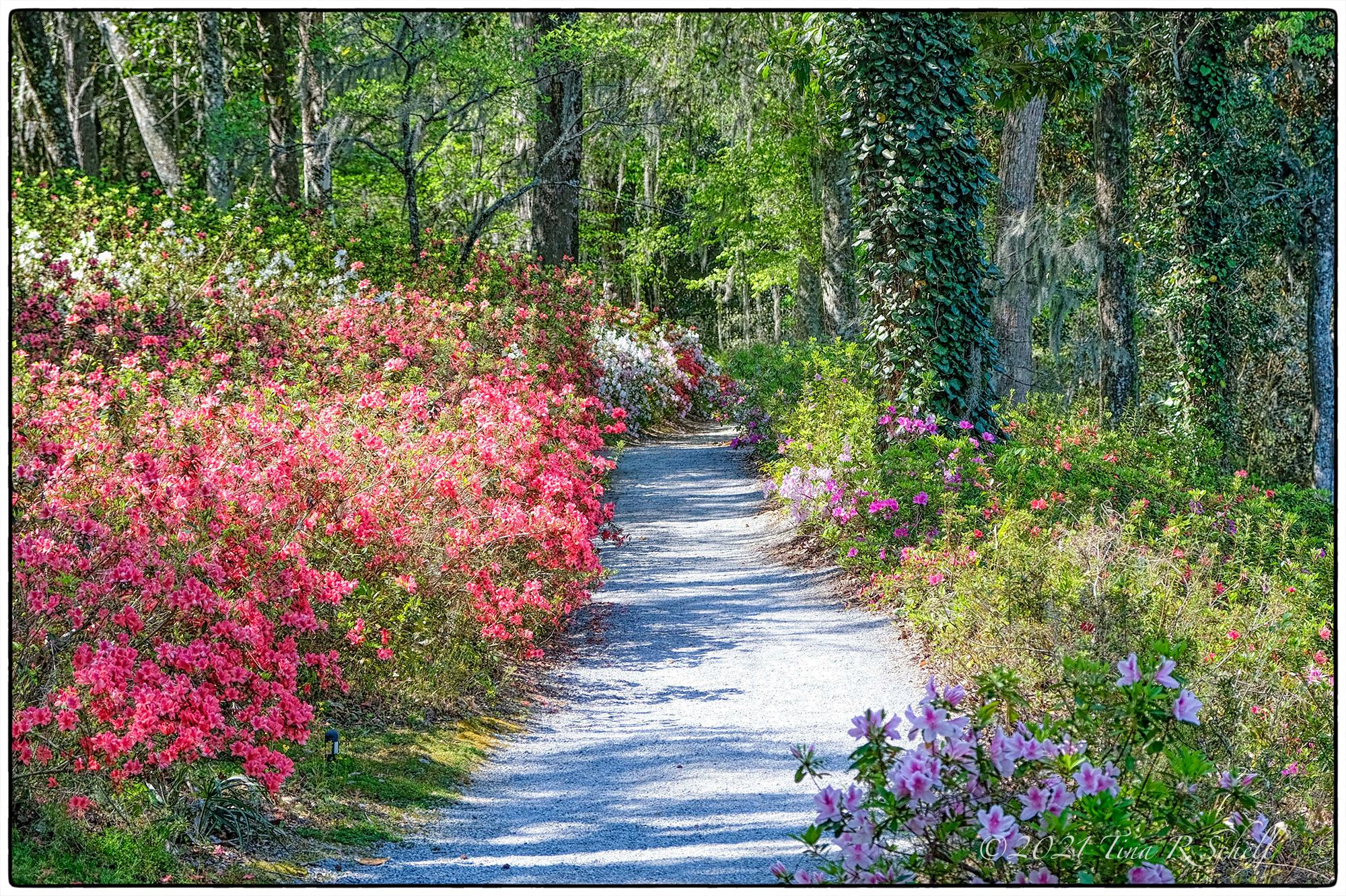 spring, flowers, path, color, Middleton Plantation