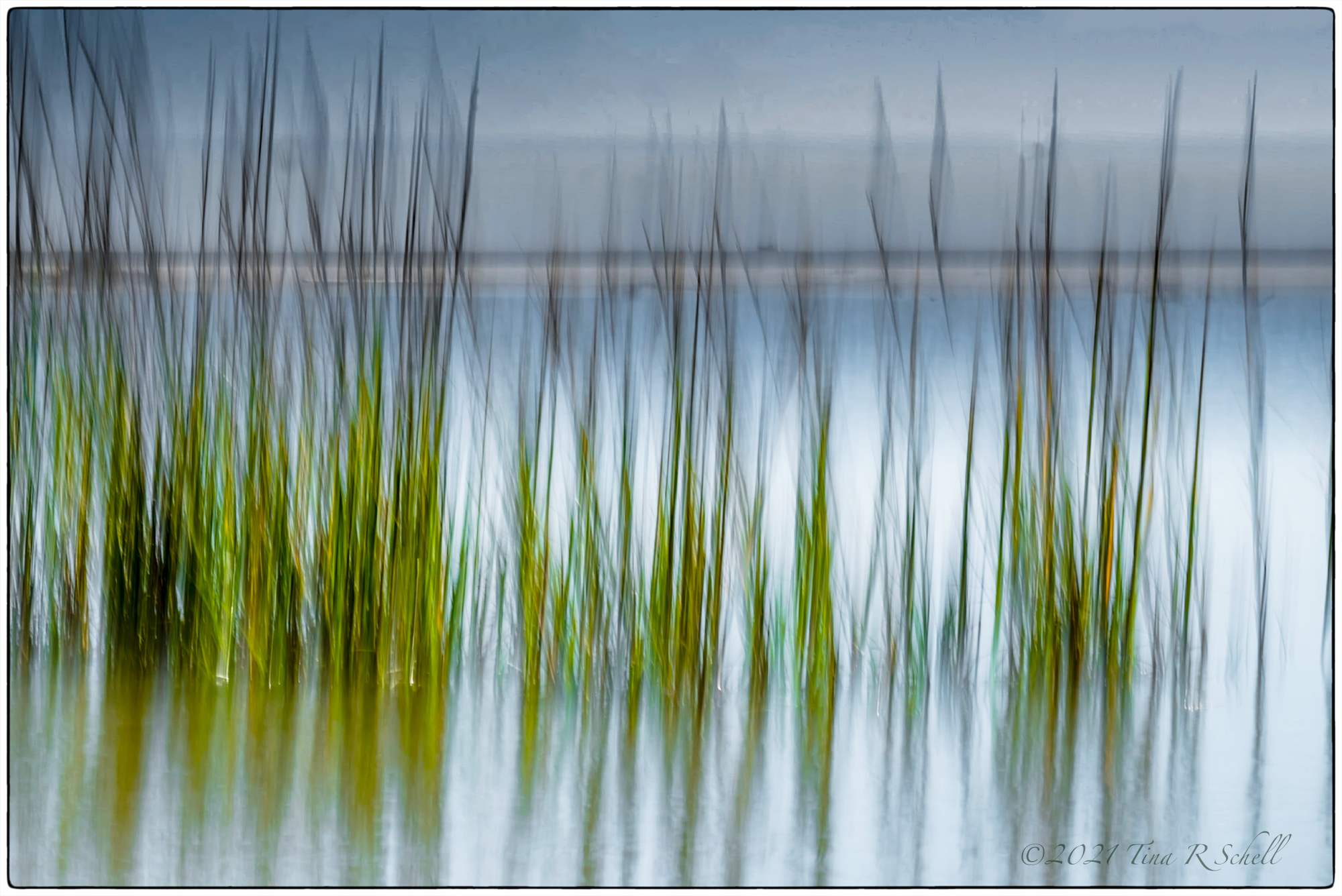 grasses, nature, abstract