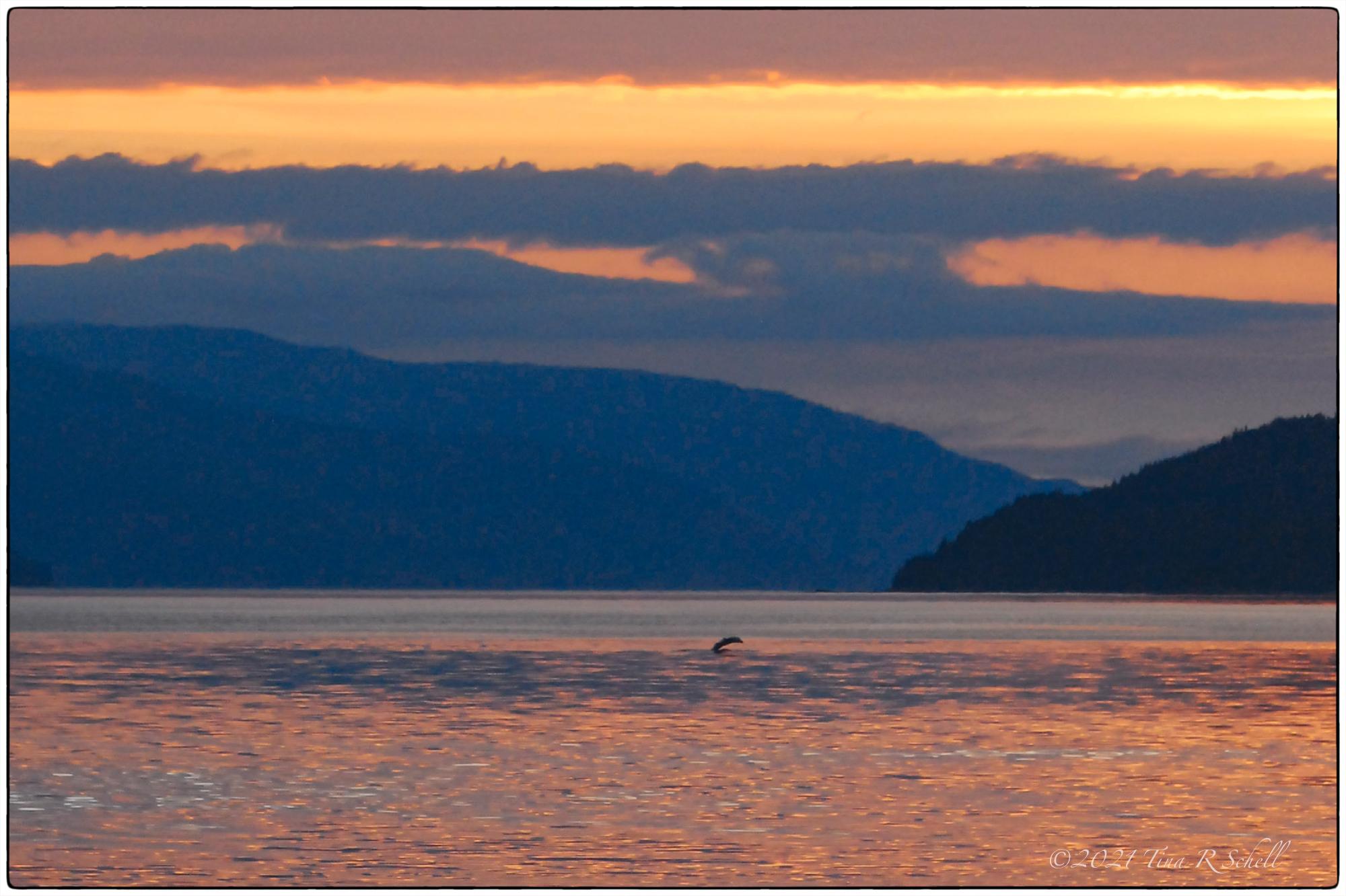 sunset, whale, glacier bay, ocean