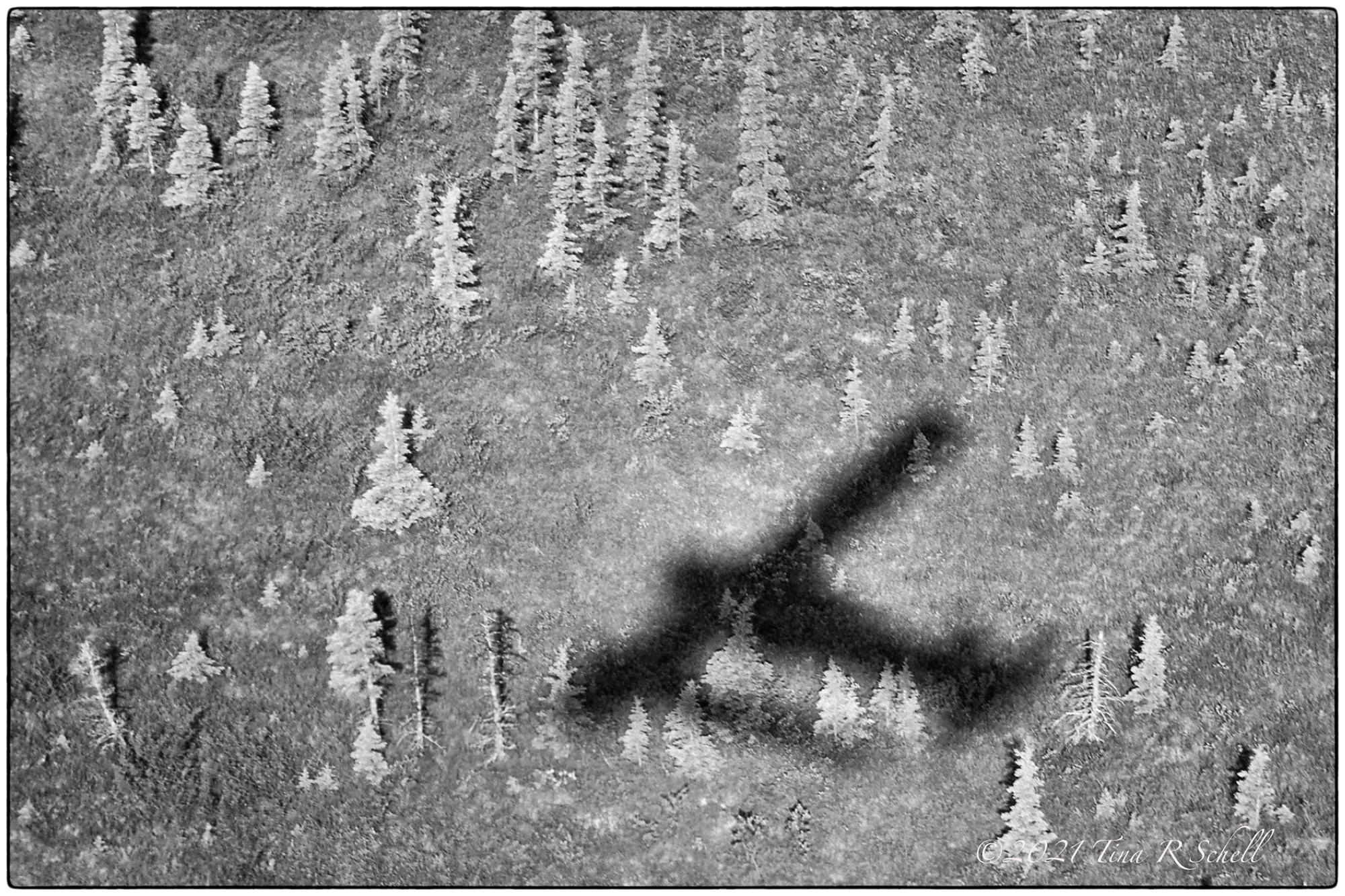 airplane, shadow