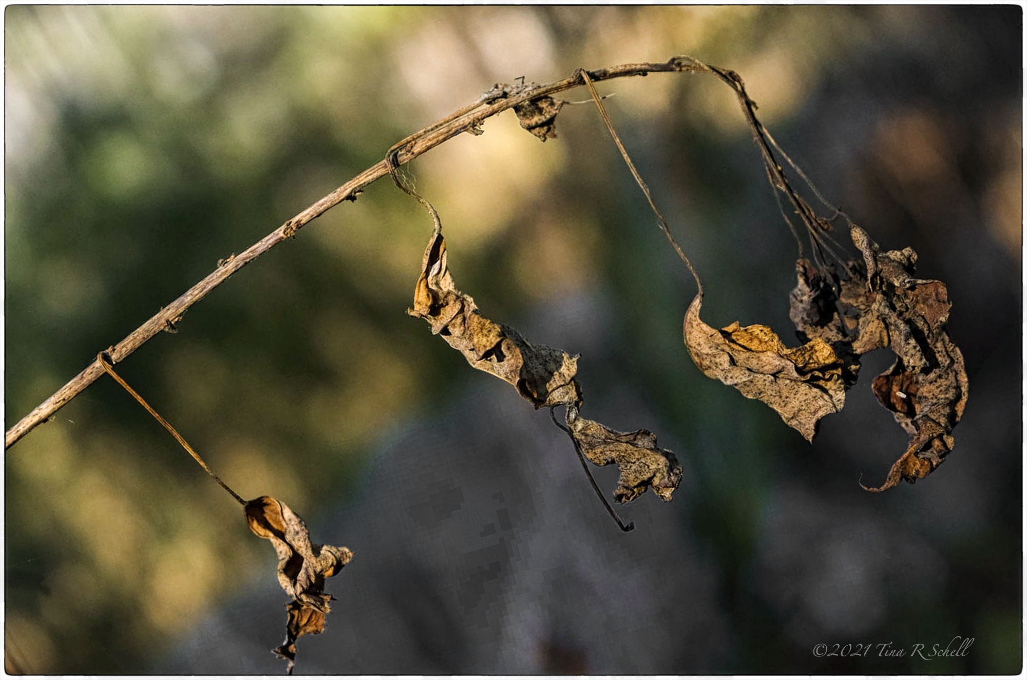 branch, dying leaves, autumn