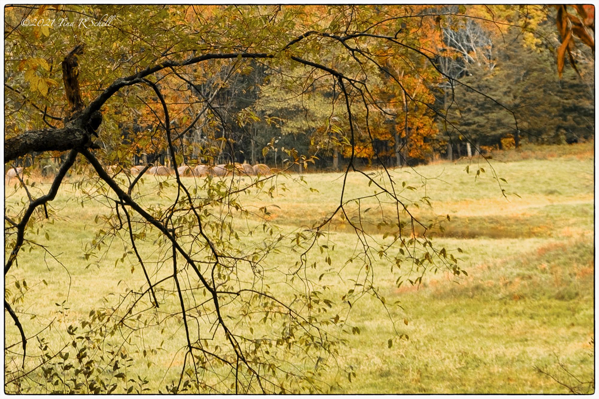 Autumn, New York state, hay bales