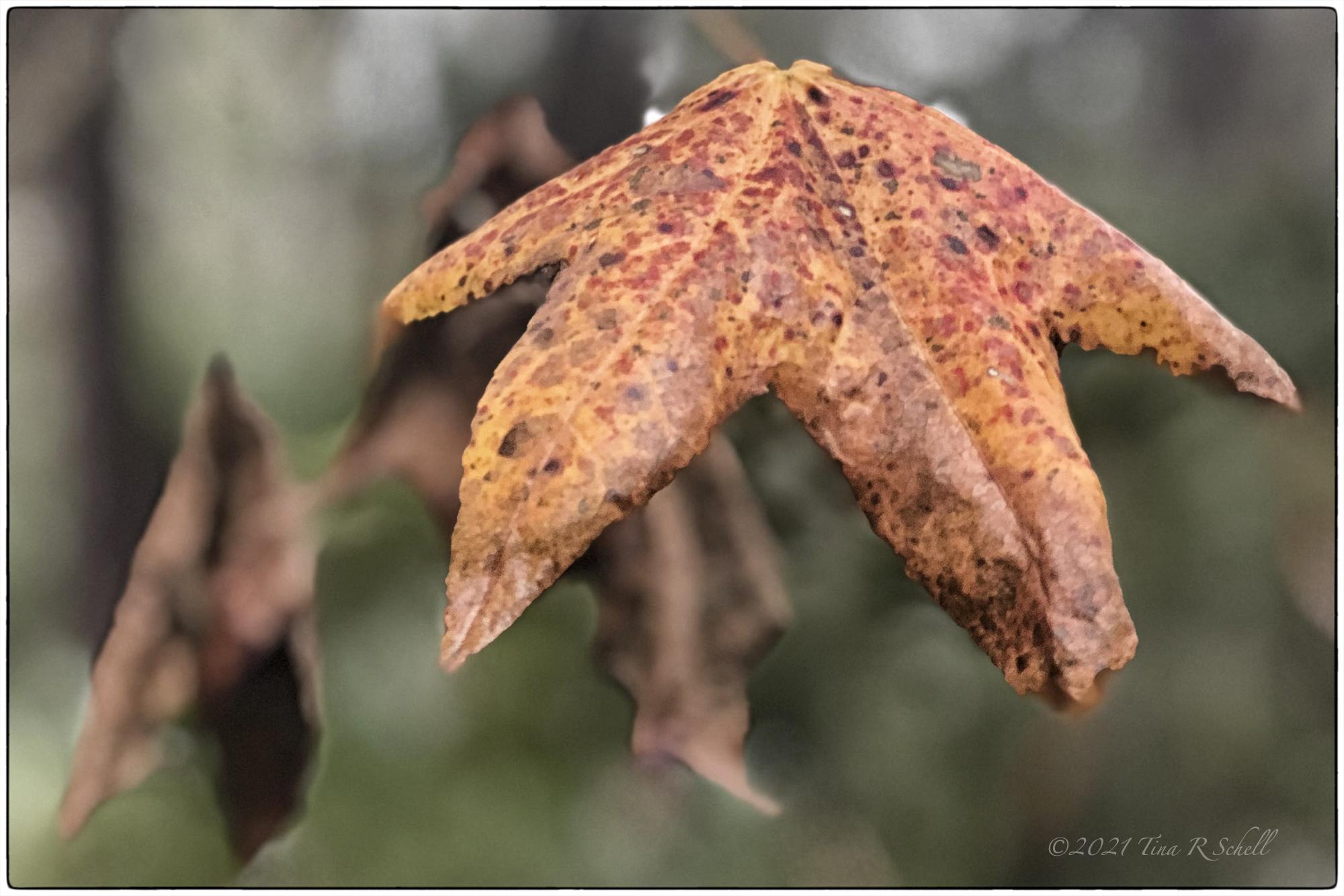 leaf, autumn, orange, brown