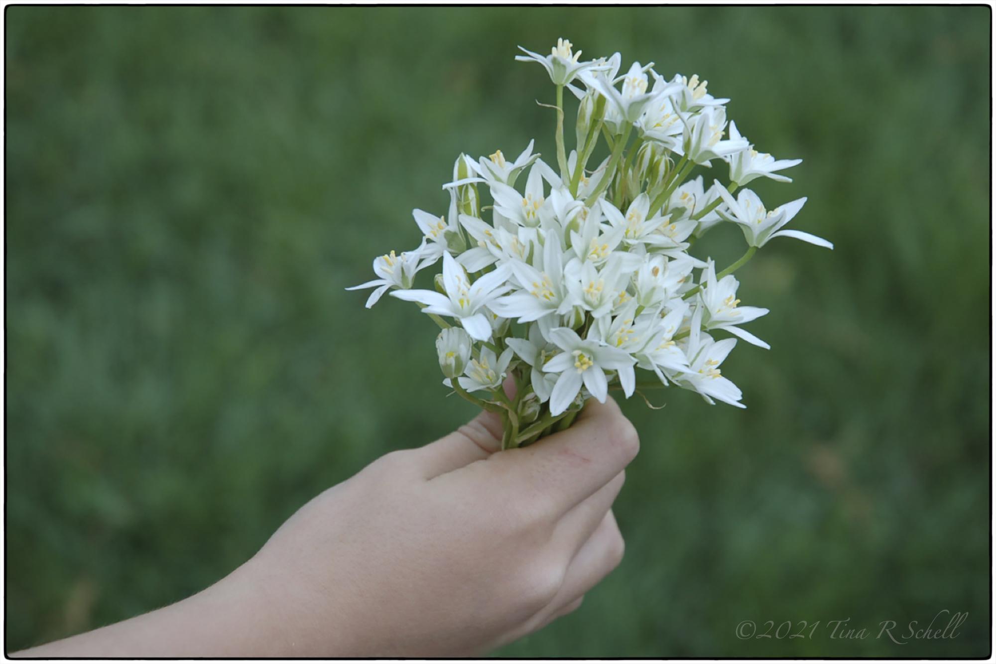 flowers, hand